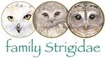 Owls artwork, family Strigidae