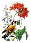 Maria Sibylla Merian - Red Exotic Flower and Robin