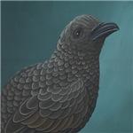 Guadalupe Storm Petrel (Oceanodroma macrodactyla)