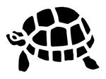 Black Turtle