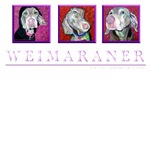 Weimaraner Trio