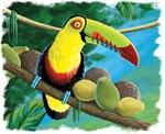 Rain Forest Toucan