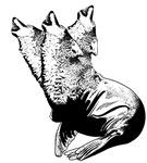 Wolf Seal Chimera