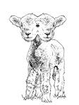 Lambiepie