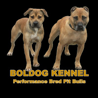 Boldog Kennel & Friends Private Reserve!