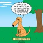 Golden Non-Retriever