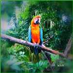 Martinique Macaw