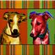 Greyhounds: Sam & Kalie