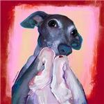 Bliss Italian Greyhound