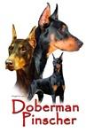Doberman Pincher