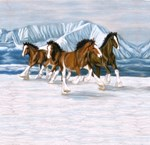 Clydesdale Running in the snow
