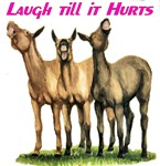 Mules, laugh till it hurts