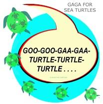GAGA FOR SEA TURTLES