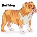 Bulldog T-shirt, Bulldog T-shirts