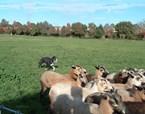Herding Calendars