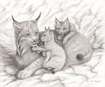 Canada Lynx Family