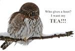 Tea Owl