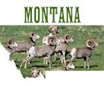 Montana Rams