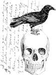 Vintage Raven & Skull