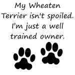 Well Trained Wheaten Terrier Owner
