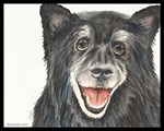 Sasha the Keeshond Mix Dog
