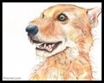 Teddie the Warm Wiry Fox
