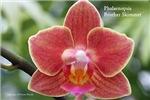 Orchid Calendar Prints