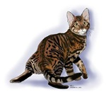 Toyger Turning Products