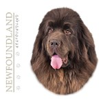 Brown Newfoundland