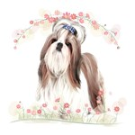 Shih Tzu with Flowers