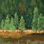 Pine Trees 10