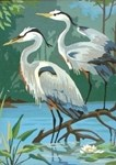 Egret Waterbird In Nature