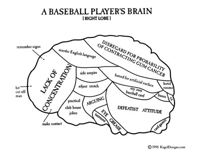 A Baseball Player's Brain