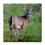 Wildlife and nature related Merchandise