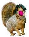 Queen Squirrel