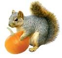 Squirrel with Pumpkin