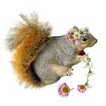 Squirrel Daisy Chain