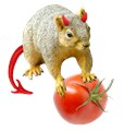 Devil Squirrel Stealing Tomato