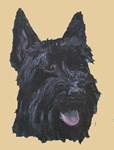 Scottish Black Terrier
