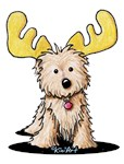 Cairn Terrier Moose
