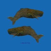 WHALE T-SHIRTS & GIFTS