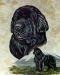 Newfoundland Portrait
