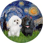 STARRY NIGHT<br>Two Poodles (min)