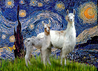 STARRY NIGHT<br>With Two Llamas