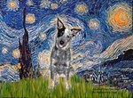 STARRY NIGHT<br>& Australian Cattle Dog