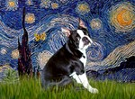 STARRY NIGHT<br>& Boston Terrier