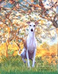 SPRING <br>& Whippet (Brown-White)