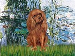 WATER LILIES (#1)<br>& Cavalier King Charles