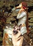 OPHELIA<br>& German Shepherd