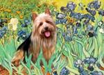 IRISES<br>& Australian Terrier